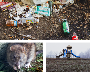Collage of images showing a neglected park, litter, and vermin.